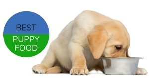 Best Puppy Food, labrador puppy eating from bowl