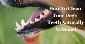How To Clean Your Dog's Teeth Naturally At Home