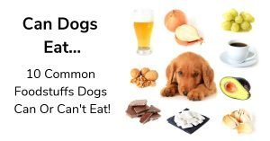 Can Dogs Eat Hummus - 10 Common Foodstuffs Dogs Can Or Can't Eat