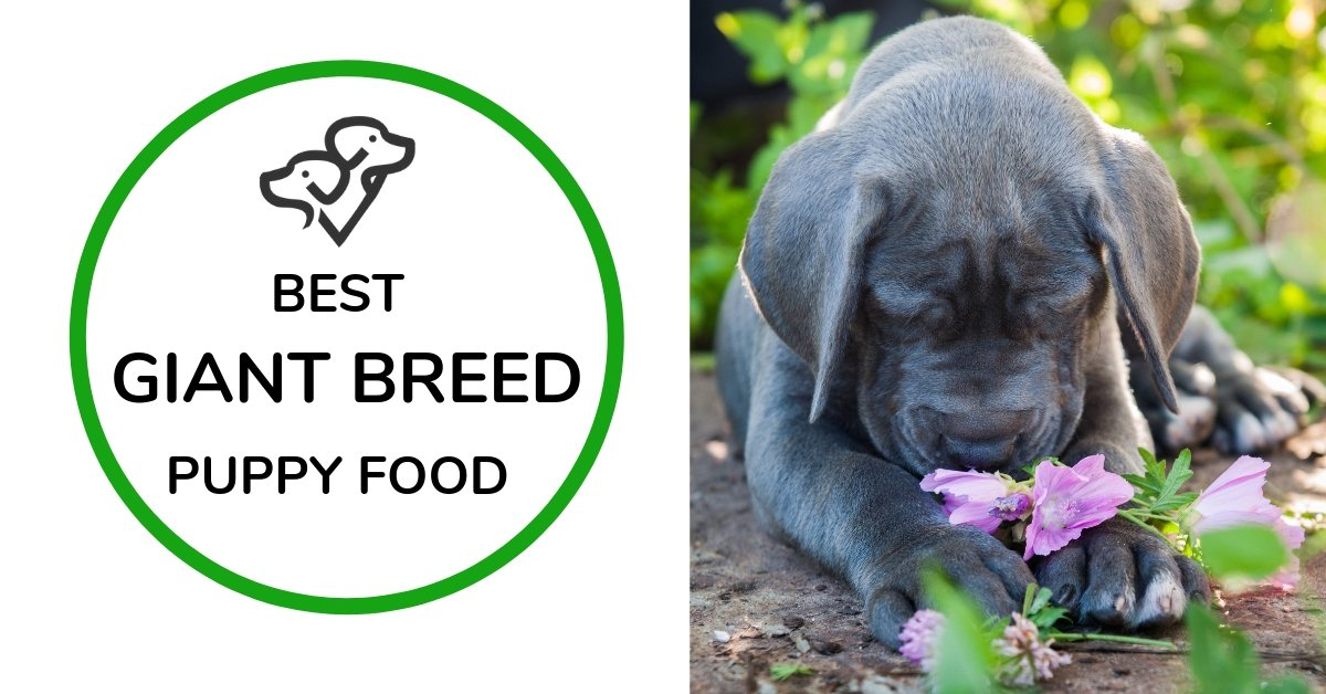 Best Large And Giant Breed Puppy Food