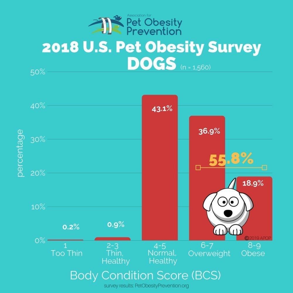 Dog Obesity Survey