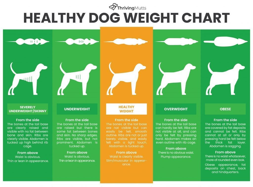 Healthy Dog Weight Chart