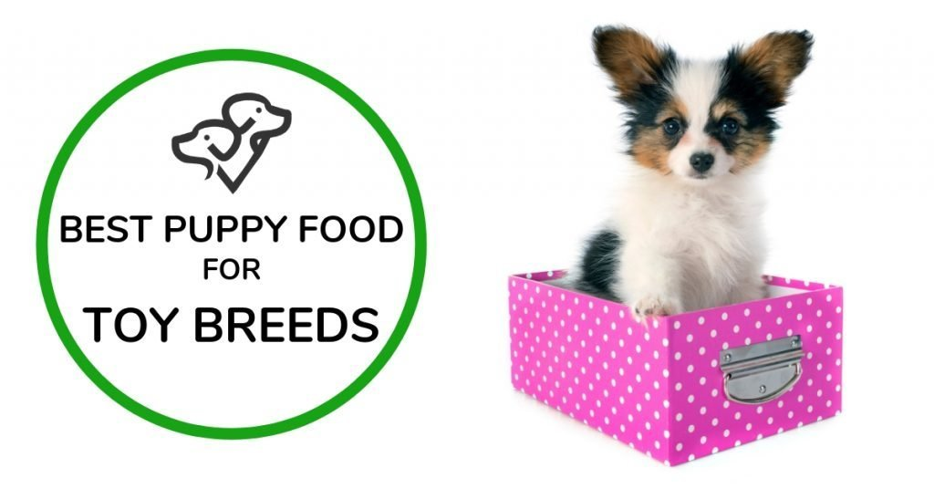 Best Puppy Food For Toy Breeds