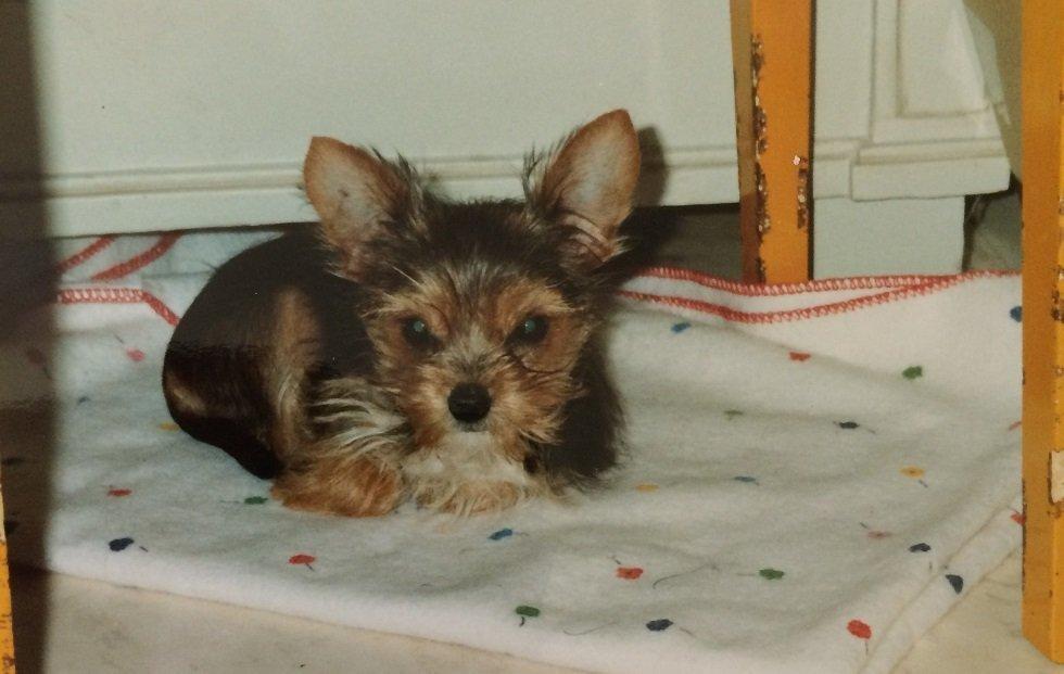 Ellen as a puppy