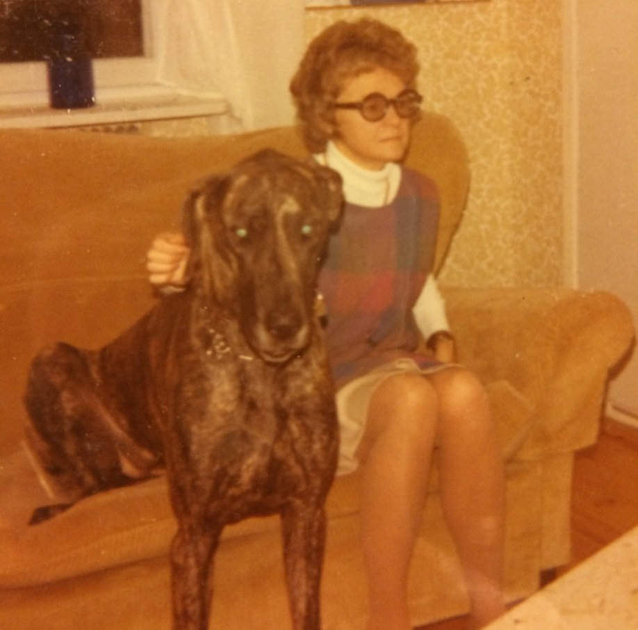 Peggy the Great Dane lapdog