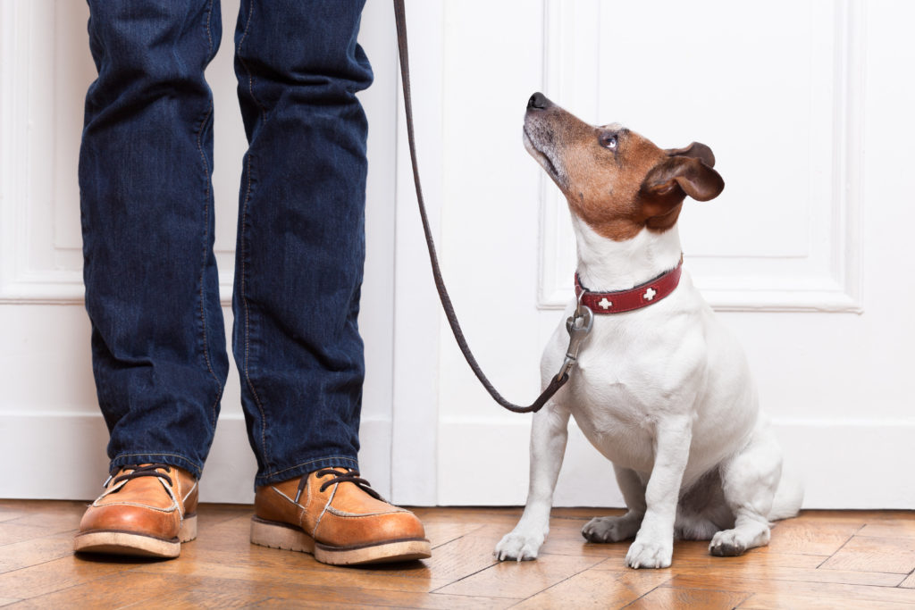 The Dog Listening method uses body language and our own behvior.