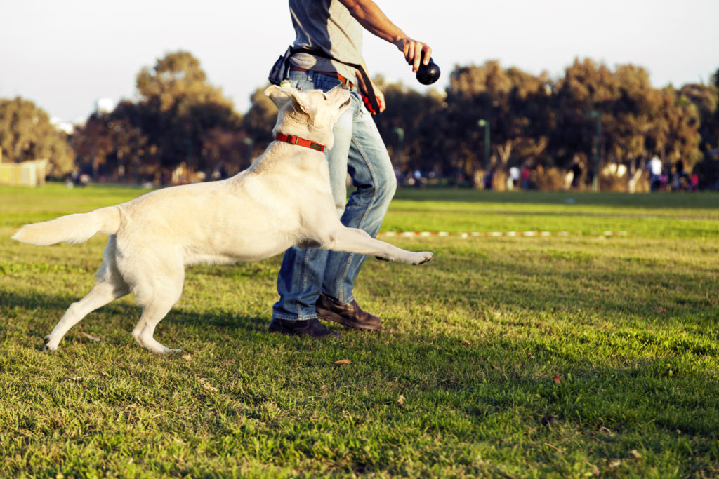 Dog training, teach your dog heel.