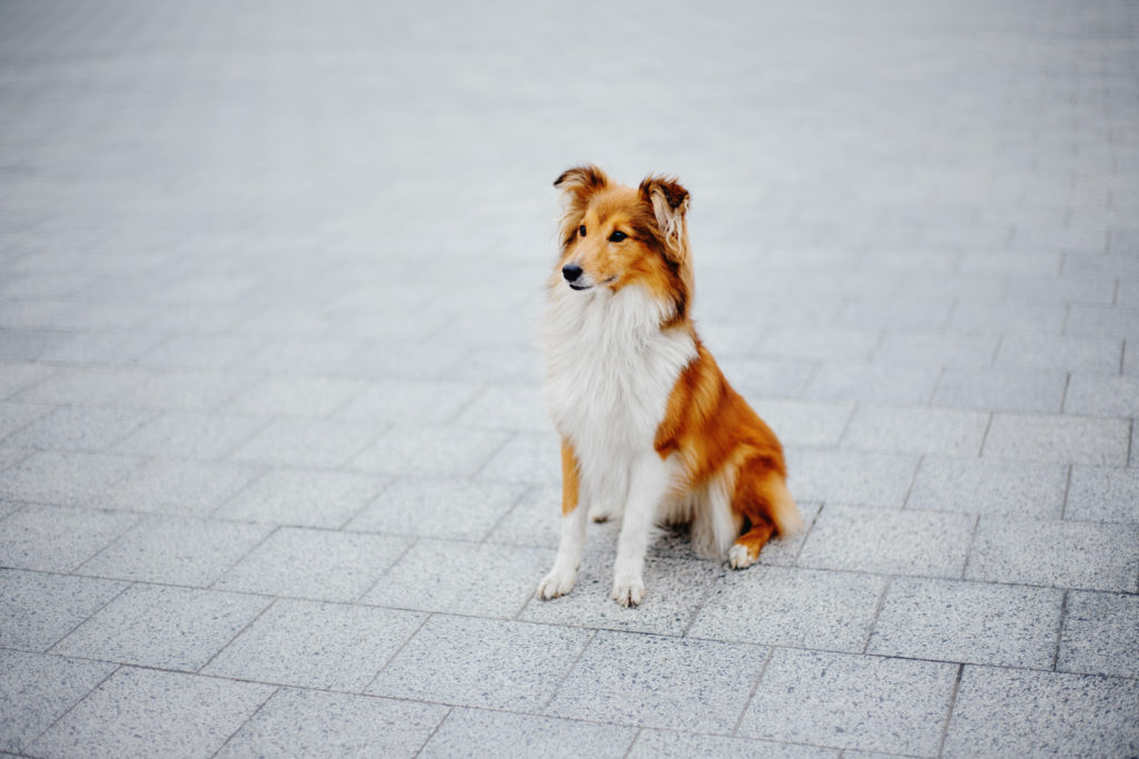Dog training, teach your dog to stay.
